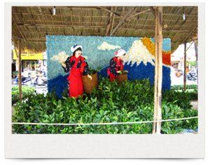 ホーチミン市Ham Nghi通り花祭り